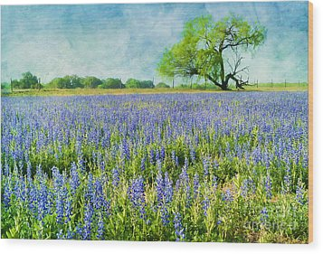 Sandy Bluebonnets Wood Print