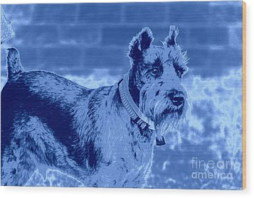 Schnauzer Wood Print by Mickey Harkins