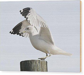 Sea Gull Wood Print by Paulette Thomas