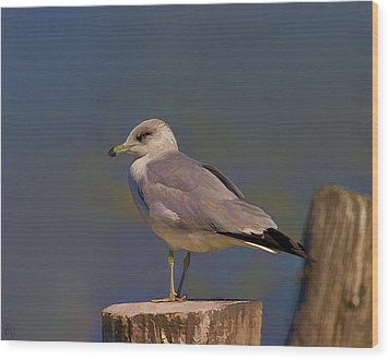 Seagull Wood Print by Hazel Billingsley