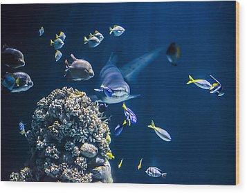 Shark Hunting Wood Print by Jaroslaw Grudzinski