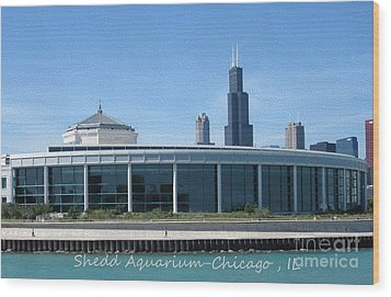 Shedd Aquarium Wood Print by Kathie Chicoine