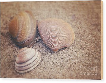 Shells  Wood Print by LHJB Photography