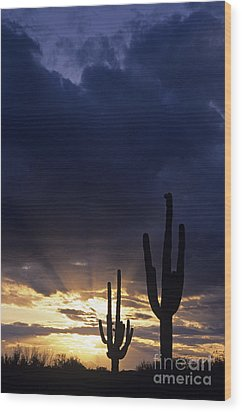 Silhouetted Saguaro Cactus Sunset At Dusk Arizona State Usa Wood Print