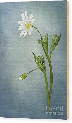 Simply Stitchwort Wood Print by Jacky Parker