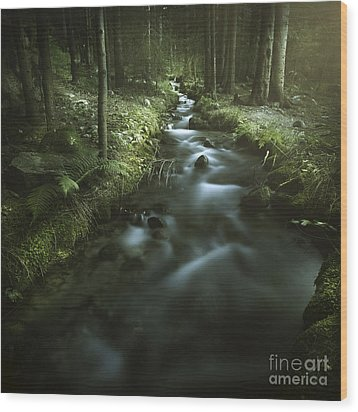 Small Stream In A Forest, Pirin Wood Print by Evgeny Kuklev