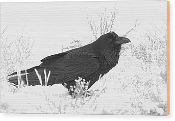 Snow Raven Wood Print