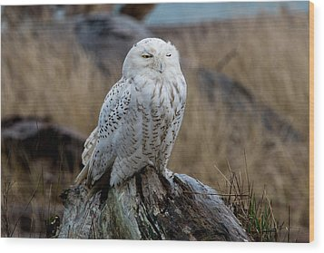 Snowy Owl Wood Print by David Yack