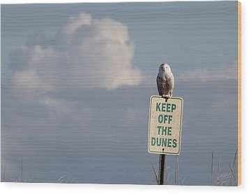 Snowy Owl Hampton Bays New York Wood Print