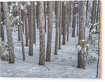 Snowy Woods Wood Print by Donna Doherty
