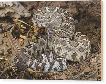 Southern Pacific Rattlesnake. Wood Print by John Bell