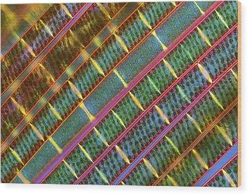 Spirogyra Algae, Light Micrograph Wood Print by Science Photo Library