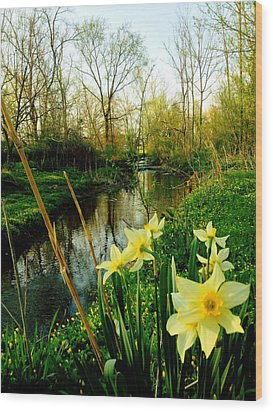 Spring In Prospect Wood Print by Andrew Martin