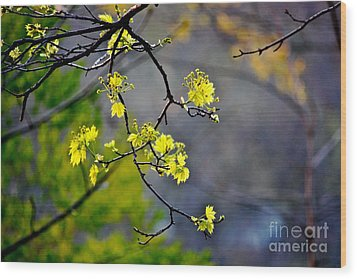 Spring Leaves Wood Print