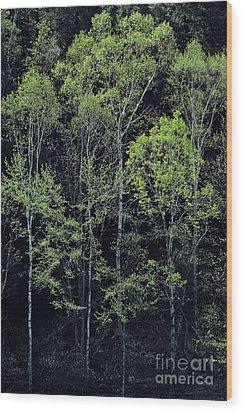 Spring Lights Wood Print by Alan L Graham