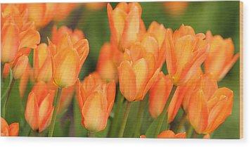 Spring Wood Print by Marc Huebner
