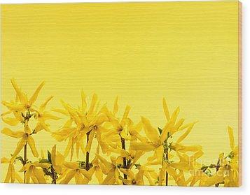 Spring Yellow Forsythia  Wood Print by Elena Elisseeva