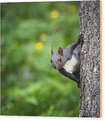 Squirrel Wood Print by Maurizio Bacciarini