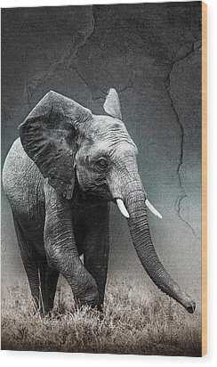 Stone Texture Elephant Wood Print by Mike Gaudaur