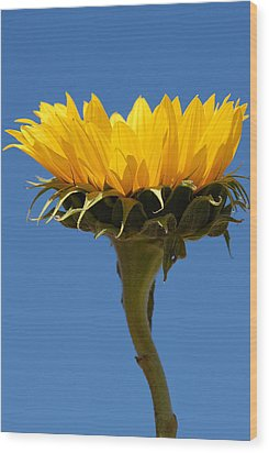 Wood Print featuring the photograph Sunflower And Sky by Susan D Moody