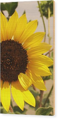 Wood Print featuring the photograph Sunflower by Diane Miller