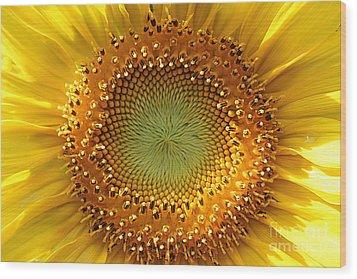 Sunflower Wood Print by Lisa L Silva
