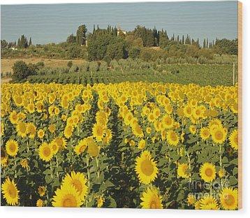 Sunflowers In Arezzo Wood Print