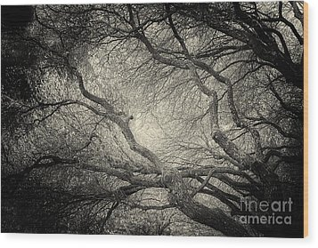 Sunlight Through Branches Of A Tree Wood Print
