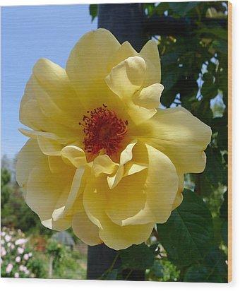 Sunny Yellow Rose Wood Print