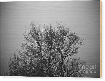 Wood Print featuring the photograph Sunset In Black And White by Mohamed Elkhamisy