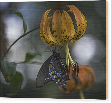 Swallowtail On Turks Cap Wood Print