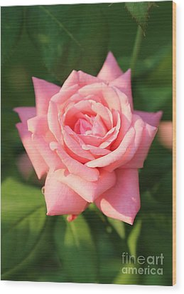 Sweet Pink Rose Wood Print by Carol Groenen