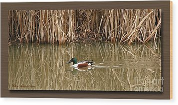 Swimming Among The Reeds Wood Print by Chris Anderson