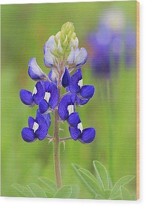 Wood Print featuring the photograph Texas Bluebonnet by Elizabeth Budd