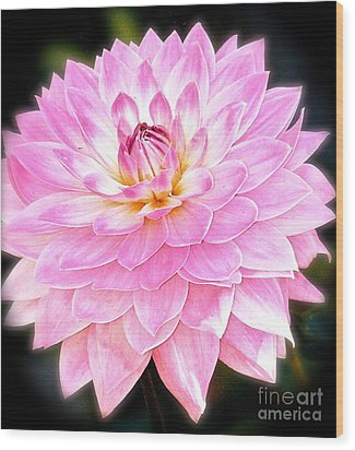 Wood Print featuring the photograph The Vivid Pink Dahlia by Margie Amberge