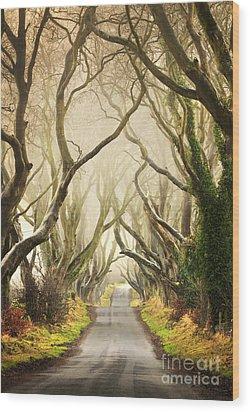 The Dark Hedges Wood Print by Pawel Klarecki