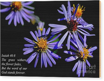 The Flower Fades Wood Print by Thomas R Fletcher
