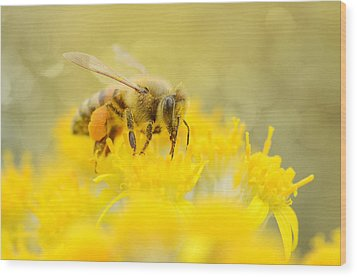 The Pollinator Wood Print by Fraida Gutovich