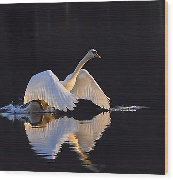 The Swan Of Zoar Wood Print by Terry Cosgrave
