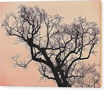 The Tree On Hobson Avenue Wood Print