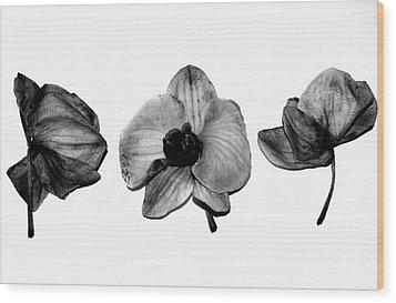 Three Beauties Wood Print