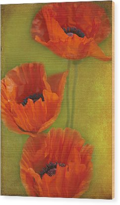 Three Poppies Wood Print by Carolyn Dalessandro