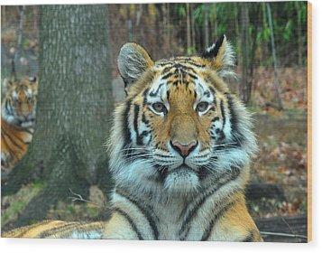 Tiger Bronx Zoo Wood Print