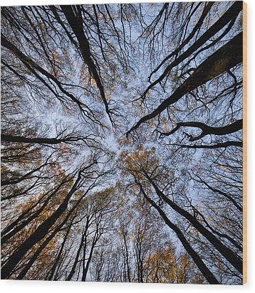 Tall Trees Wood Print