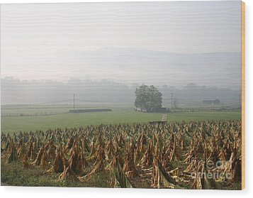 Tobacco In The Field Wood Print by Annlynn Ward
