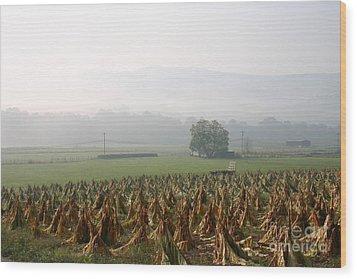 Tobacco In The Field Wood Print
