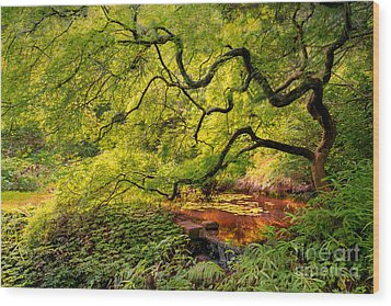 Tranquil Shade Wood Print