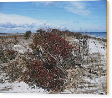 Tranquility Bay Wood Print by Scott Allison