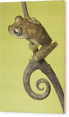 Tree Frog On Twig In Background Copyspace Wood Print