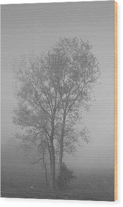 Tree In Morning Fog Wood Print by Eje Gustafsson